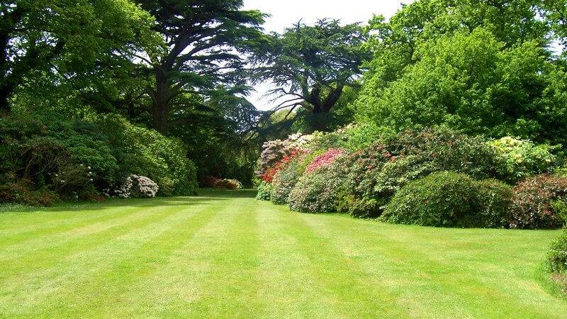 Merkmale und Standorte sowie Inhaltsstoffe und Verwendung des Faulbaums als Heilmittel
