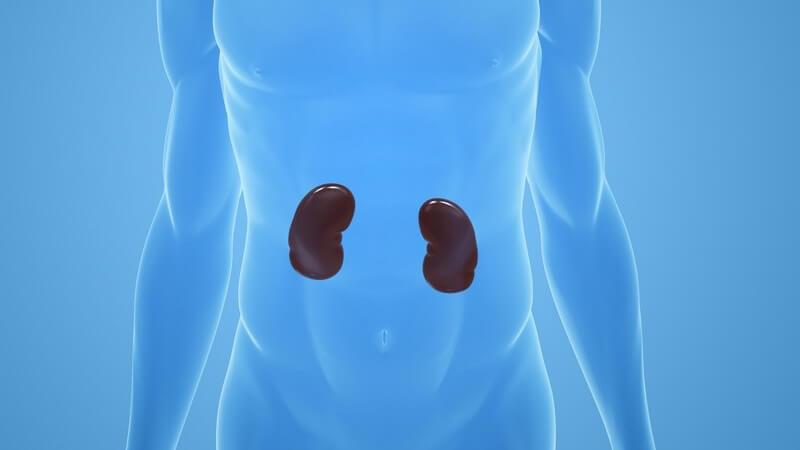 Die Entstehung eines chronischen Nierenversagens und wie man es erkennen und behandeln kann