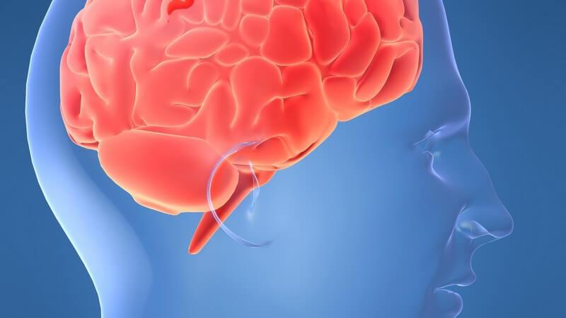 Die Entstehung der Creutzfeldt-Jakob-Krankheit und wie man sie erkennen und behandeln kann