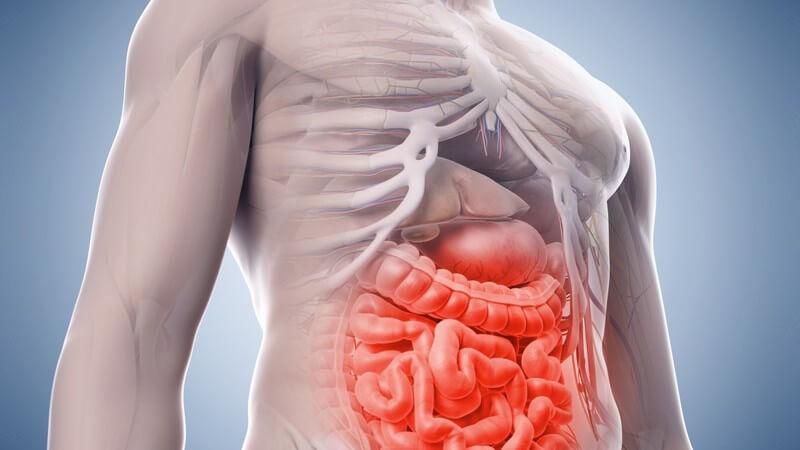 Die Entstehung einer akuten und chronischen Darmentzündung und wie man sie erkennen und behandeln kann