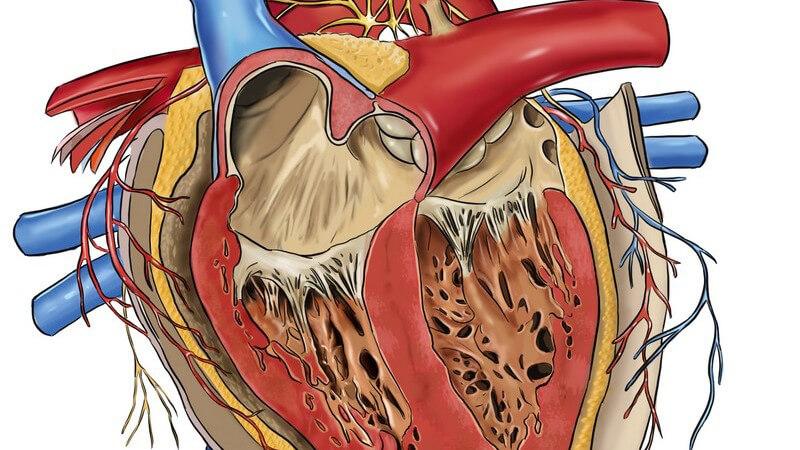Die Entstehung einer Endokarditis und wie man sie erkennen und behandeln kann