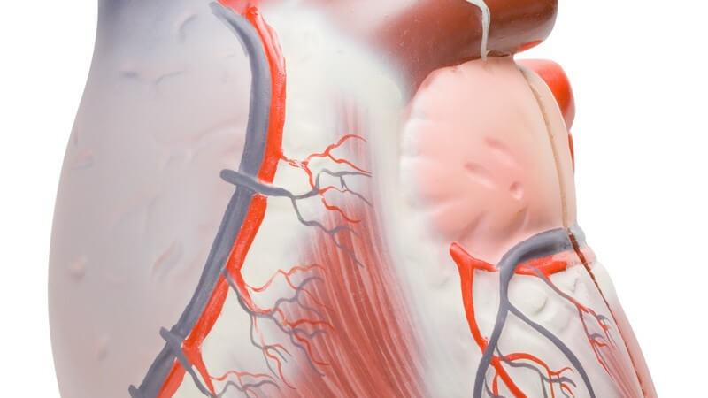 Die Entstehung einer Herzmuskelentzündung und wie man die Myokarditis erkennen und behandeln kann