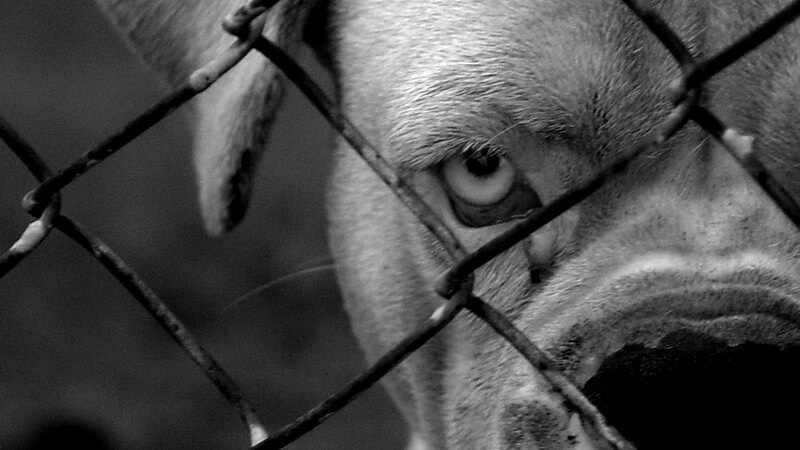 Die Entstehung eines Hundebisses und wie man ihn erkennen und behandeln kann