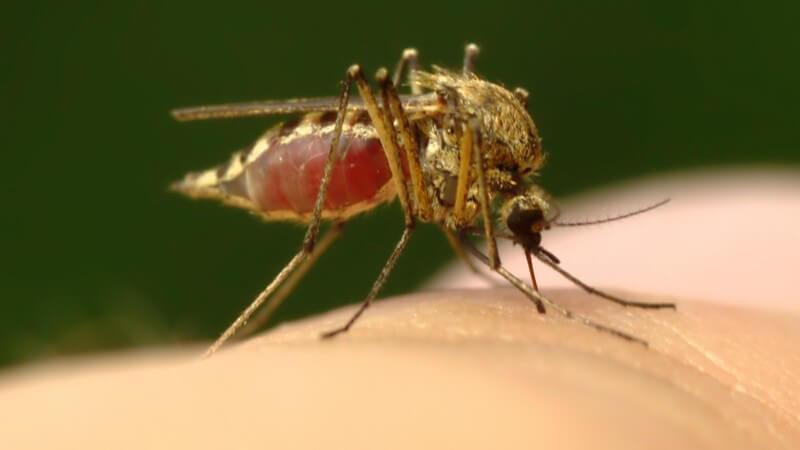 Die Entstehung von Mückenstichen und wie man sie erkennen und behandeln kann