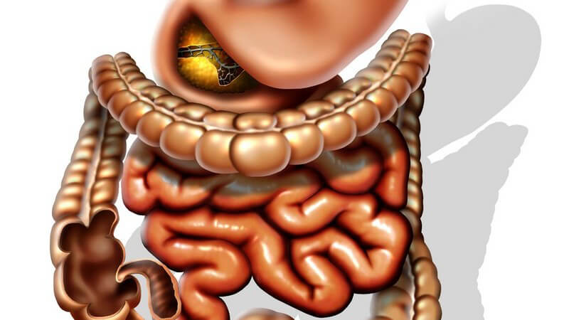 Funktion und Durchführung sowie mögliche Komplikationen der Magen-Darm-Passage zur Röntgendurchleuchtung
