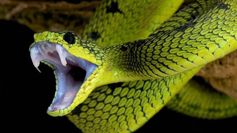 Die Entstehung von Schlangenbissen und wie man sie erkennen und behandeln kann