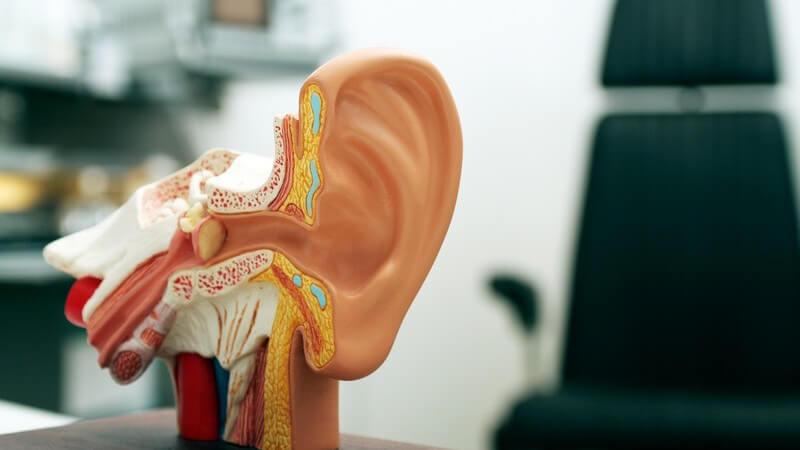 Die Entstehung von Segelohren und wie man abstehende Ohren behandeln kann