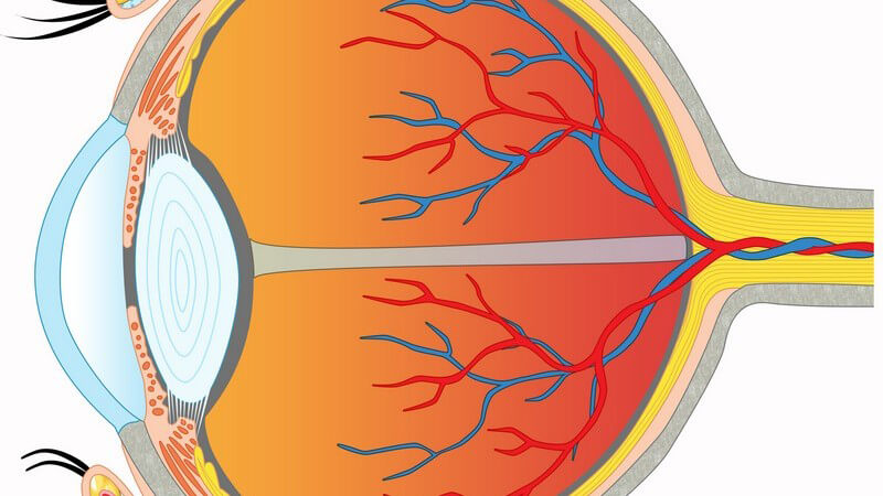 Anwendung und Ablauf der Ophtalmoskopie (Augenspiegelung vom Augenhintergrund)