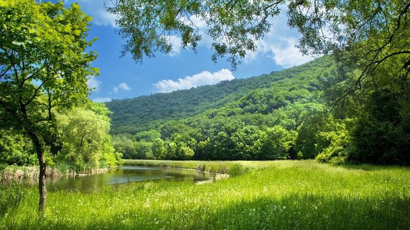 Merkmale, Arten, Standorte, Inhaltsstoffe und Verwendung der Pestwurz als Heilmittel