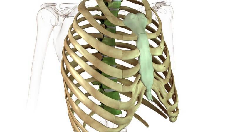 Funktion und Durchführung sowie mögliche Komplikationen der Pleurapunktion zur Punktion des Brustfells
