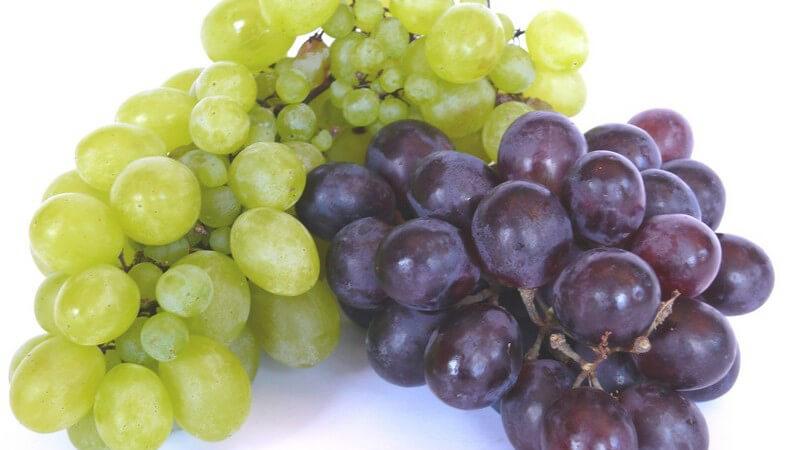 Die Vinotherapie zur Behandlung mit Traubenkernprodukten