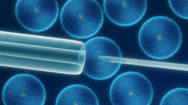 Bereiche und Möglichkeiten der Reproduktionsmedizin