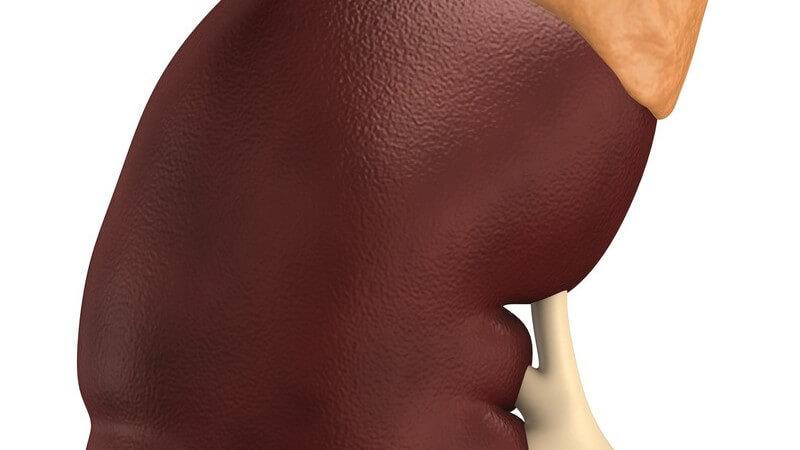 Die Durchführung einer Transplantation zur Verpflanzung von Organen
