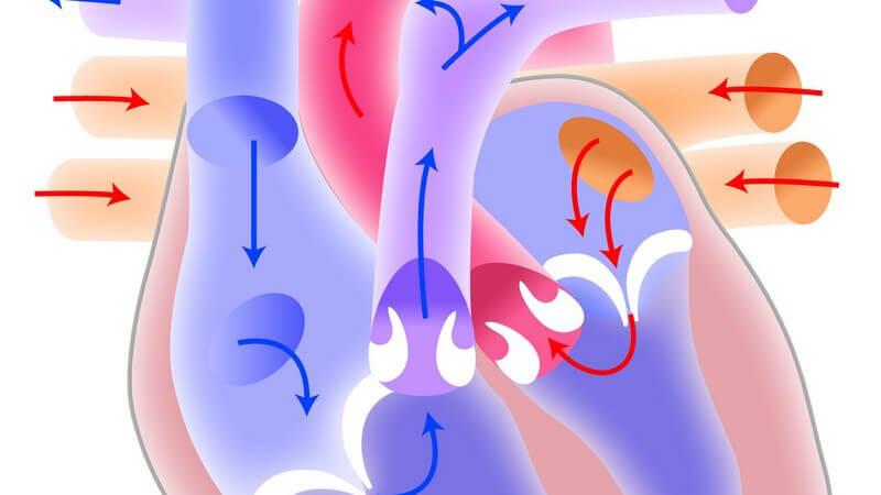 Einsatz, Dosierung und Risiken von Mitteln zur Behandlung von Herz-Kreislaufbeschwerden