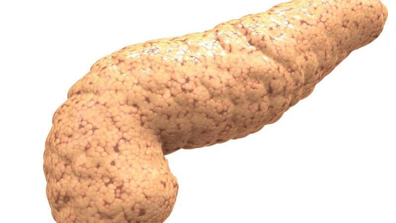 Das Pankreas bildet verschiedene Enzyme und Hormone; die Bauchspeicheldrüse fungiert als exokrine und endokrine Drüse