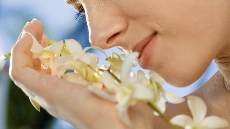 Die Entstehung von Geruchsstörungen und wie man sie behandeln und lindern kann