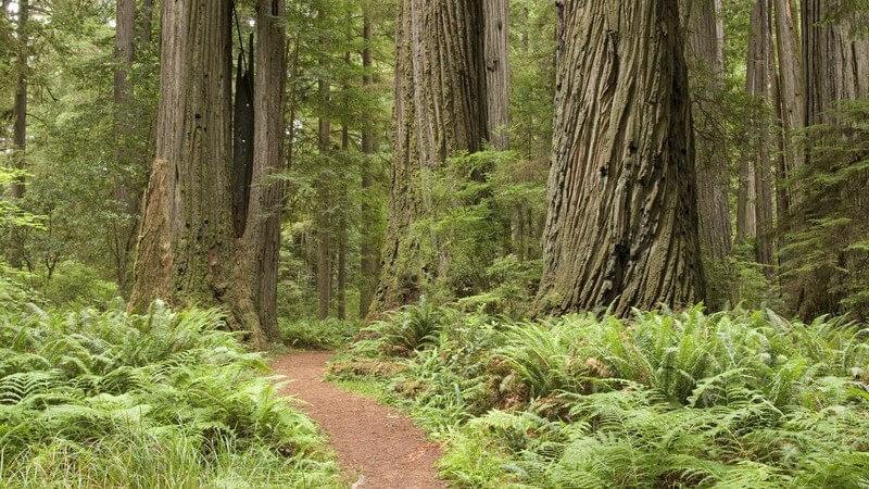 Je nach Beweggrund und Motivation für das Laufen eignen sich z.B. ein Weg entlang eines Flusses, eine steile Bergetappe oder eine Wettkampfroute