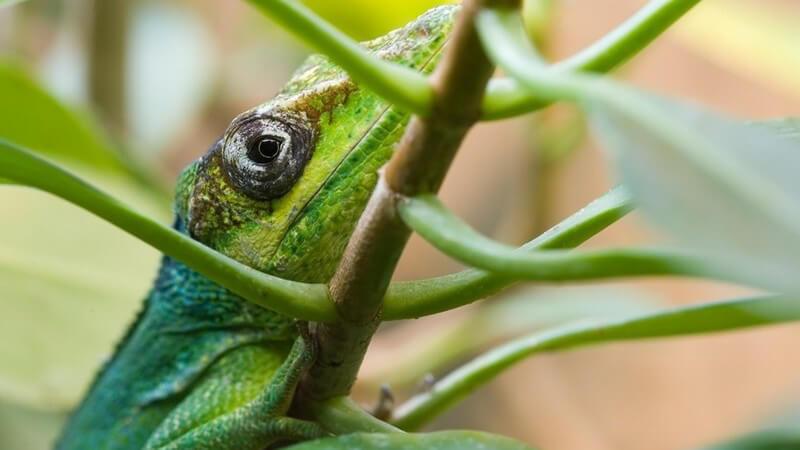 Vögel, Fische, Säugetiere - Informationen zu den unterschiedlichen Tieren sowie deren Abstammung findet man in einem zoologischen Museum