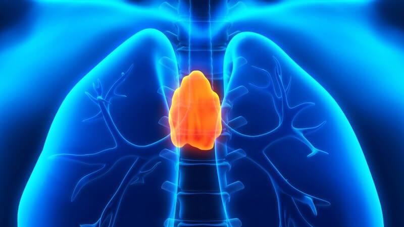 Neben dem Blutkreislauf gilt das Lymphsystem als wichtigstes Transportsystem im menschlichen Körper