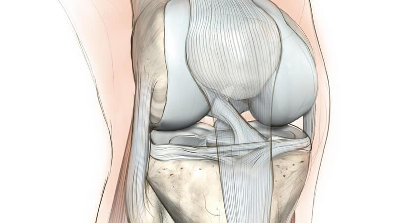 Der Meniskus hat eine Stabilisations- und Pufferfunktion; zudem mindert er die Reibung im Kniegelenk