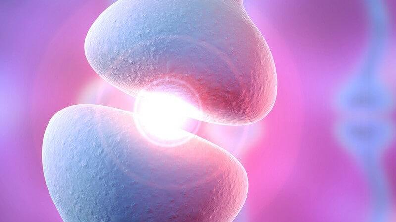 Das menschliche Nervensystem dient der Steuerung von unterschiedlichen Funktionen, die im Körper ablaufen