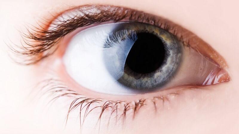 Die Pupille kann sich erweitern und wieder verkleinern; dadurch kann der Lichteinfall auf die Netzhaut angepasst werden