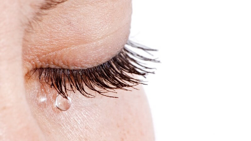Die Lebensdauer eines Wimpernhaars beträgt 100 bis 150 Tage