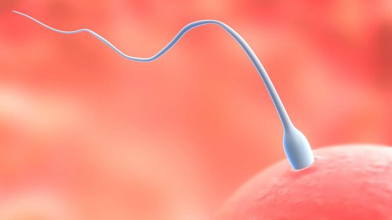 Das Ejakulat wird vom Mann während eines Orgasmus aus der Harnröhre ausgestoßen