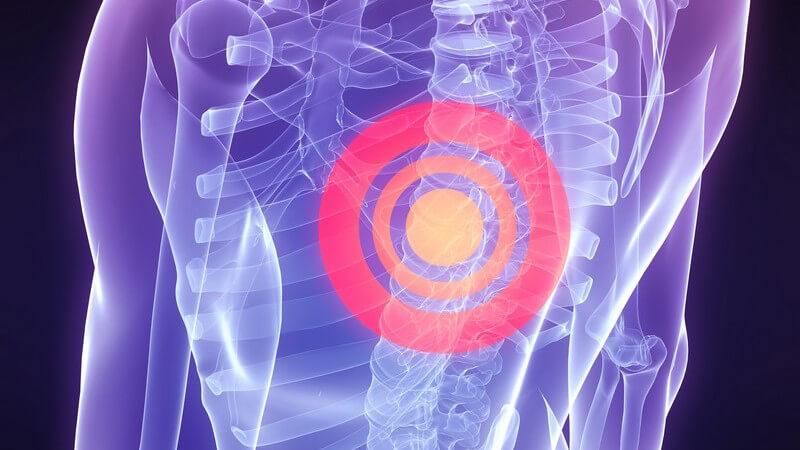 Von der Wirbelsäule wird fast das gesamte Körpergewicht getragen; sie wird in verschiedene Abschnitte eingeteilt
