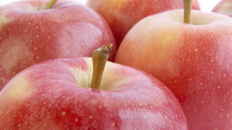 Neben dem puren Genuss werden Äpfel besonders gerne zum Backen verwendet