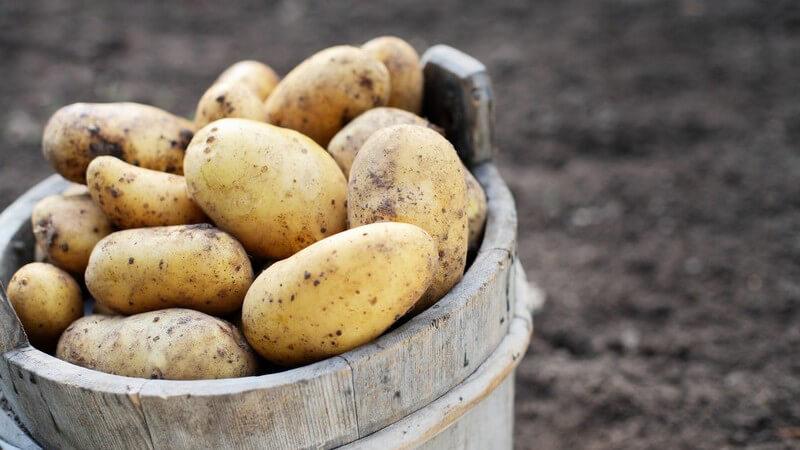 Erdäpfel gehören zum täglichen Speiseplan dazu und enthalten wichtige Nährstoffe