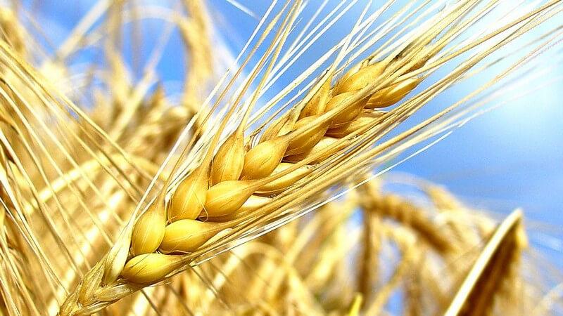 Man verwendet Getreide vor allem, um Brot, Backwaren, Nudeln oder Reis herzustellen