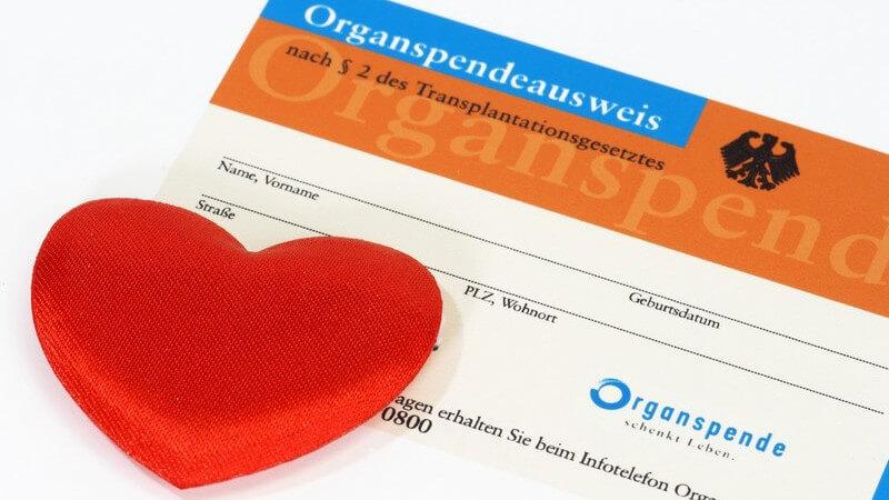 Wieso der Organspendeausweis so wichtig ist - Aufbau, Inhalt und Anlaufstellen, um Organspender zu werden