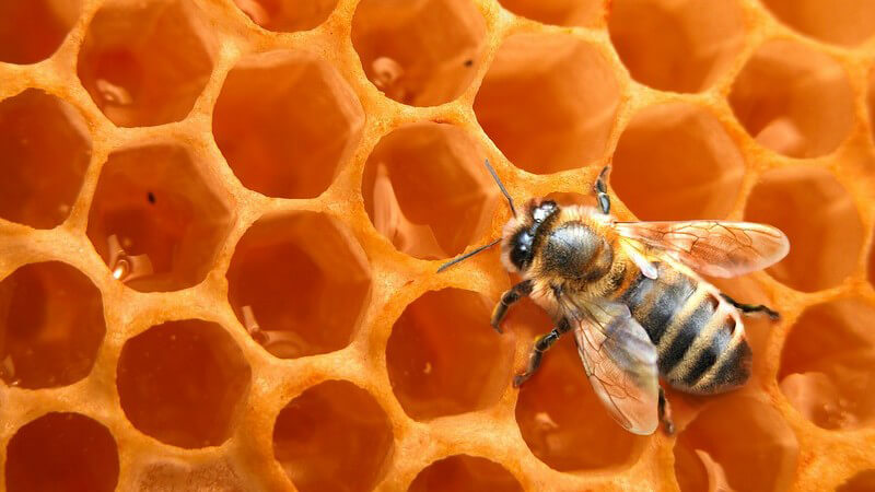 Wissenswertes zu Honig