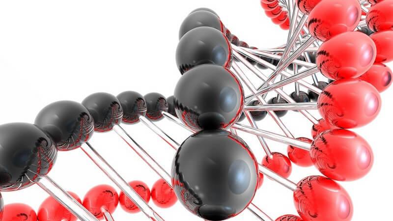 Etwa 30000 Gene im menschlichen Erbgut sorgen für die Steuerung der körperlichen Abläufe - Bei der Vererbung unterscheidet man zwischen dominanten und rezessiven Erbmerkmalen