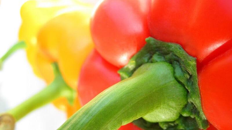 Paprika gibt es in unterschiedlichen Schärfegraden; verantwortlich dafür ist der unterschiedliche Gehalt an Capsaicin
