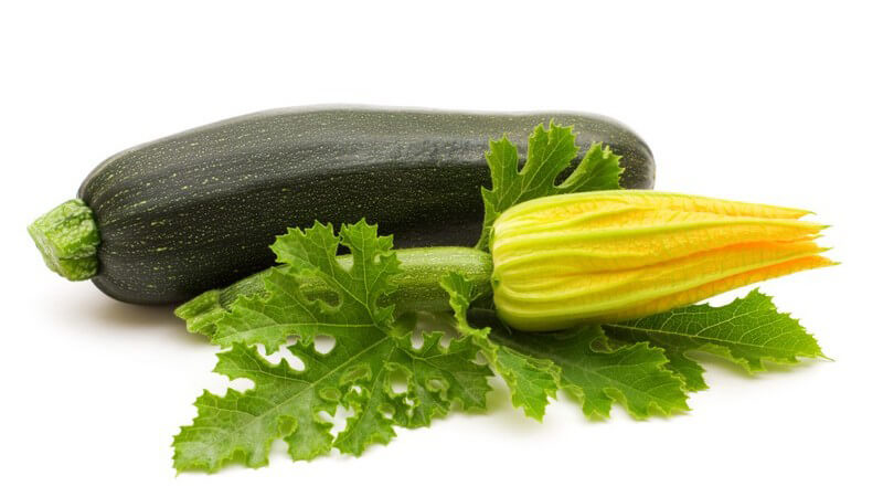 Die Zucchini lässt sich vielseitig zubereiten - von der cremigen Suppe bis zum Auflauf - und lässt sich auch im eigenen Garten anbauen