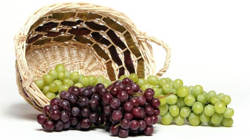 Als frisches Obst, in Rosinenform oder im Wein - Weintrauben sind in ihrer Verwendung sehr vielfältig und enthalten zahlreiche wichtige Nährstoffe