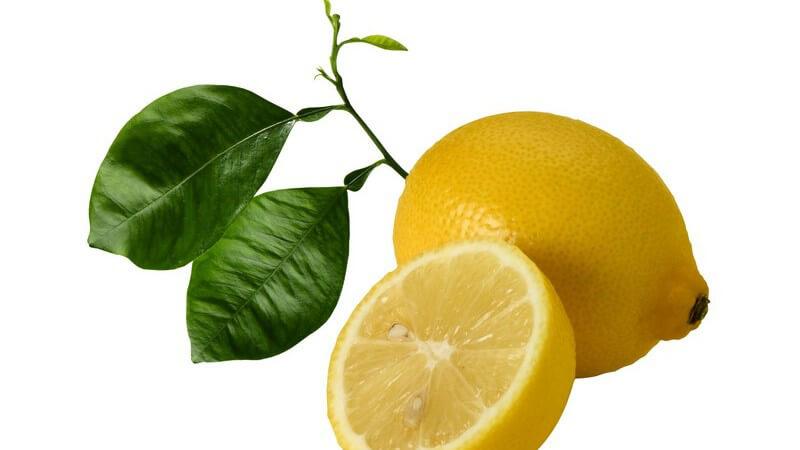 Die beliebten Zitrusfrüchte haben einen hohen Vitamin C-Gehalt und sind in der Küche vielfältig verwendbar - auch im Haushalt oder in der Körperpflege kommt die Zitrone zum Einsatz